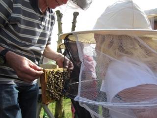 Bienenlehrpfad in Berge - als außerschulischer Lernort